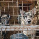 Psy ugotowały się żywcem. Do tragicznego zdarzenia doszło na terenie warszawskiego…