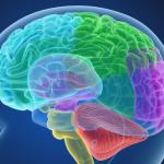 Masz problemy z koncentracją? Te produkty wspomagają pracę mózgu!