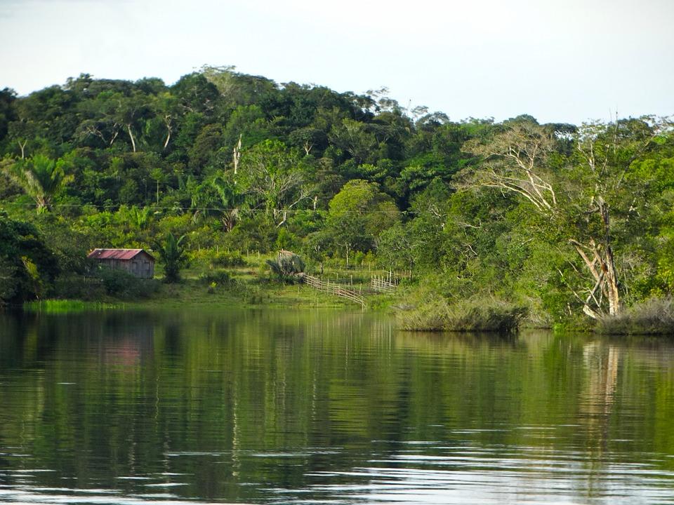 amazonii