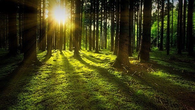 lasów