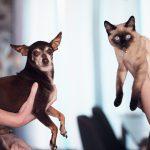 WAŻNA wiadomość dla posiadaczy psów i kotów! Chodzi o koronawirusa!
