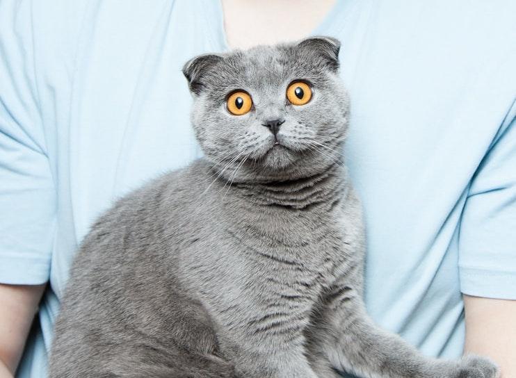 Koty w obliczu pandemii. Głaskać czy lepiej sobie darować?