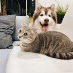 NIEZWYKŁE właściwości kotów i psów! Czy to NATURALNA szczepionka NA…