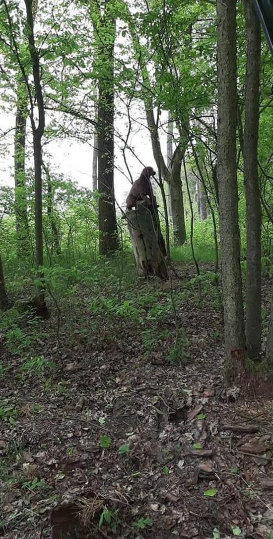 Leśnik przeżył chwile grozy. W lesie natknął się na TO monstrum!