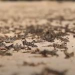 Po epidemii, nadciąga kolejna plaga! Ludzie są przerażeni! (VIDEO)
