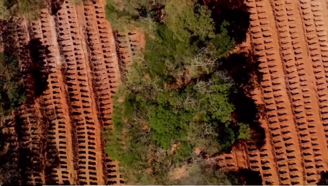 groby w Brazylii