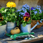 Jak zadbać o przydomowy ogródek? Kiedy kosić, a kiedy podlewać – o tym musisz pamiętać!
