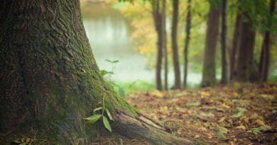 Wszedł do lasu i mógł już z niego nie wrócić! Wpadł do…