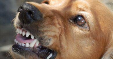 Niewyobrażalna tragedia! Psy nie miały dla nich litości!